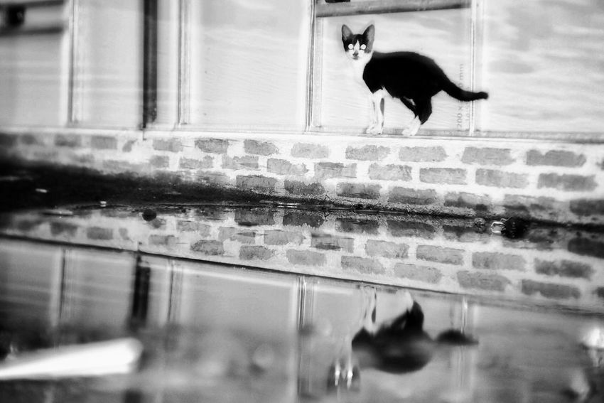 One Animal Domestic Cat Animal Themes Water Pets Reflection Outdoors Apf Megazine Street Black And White Photography Street Photo Bw One Person Street Photographers This Is My Street Indonesia Street Photography Street Photograhy International Street Photography Documentary Indonesia_photography Streetphotographyinternational Streetphotographers Mammal Domestic Animals No People Day Feline