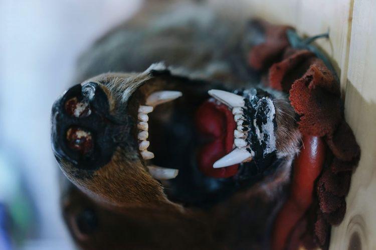 Close-up of bear head