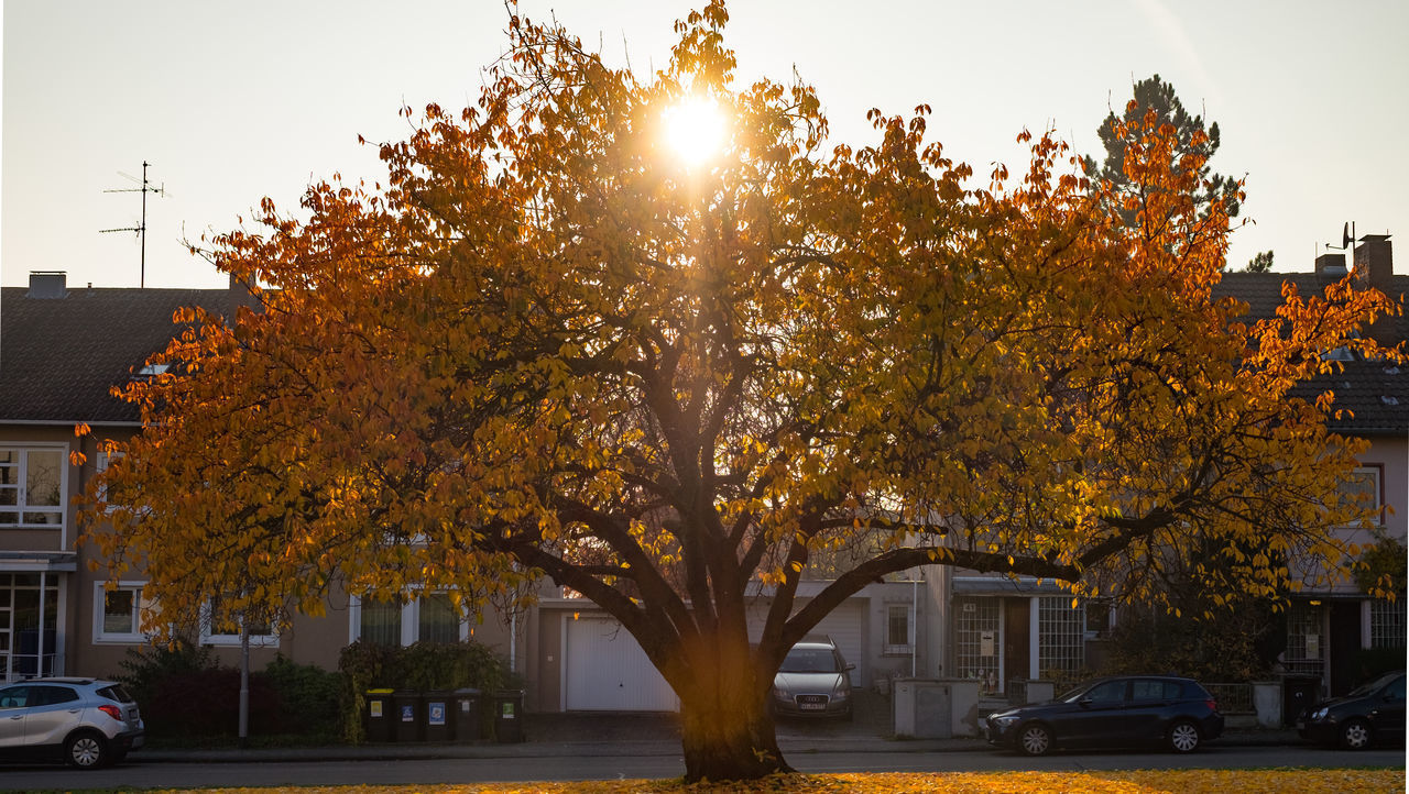 tree, building exterior, architecture, built structure, city, outdoors, sunlight, no people, change, growth, autumn, city life, car, nature, day, clear sky, sky, sunset, beauty in nature, cityscape