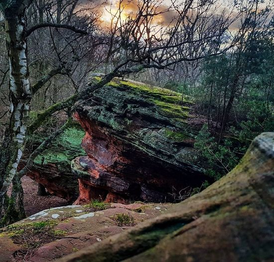 Katzensteine Satzvey Satzvey Playing Outside Onelove♥ LoveNature 🌼 Structure And Nature Sandstone Rock Formation Forest Photography Magical Places Eifel Germany Exploring Nature Mother Nature Photography Enjoying Life EyeEm Nature Lover EyeEm Gallery Beauty In Nature Turnoffyourtv Go Outside Nature Tree No People Day Growth Outdoors Beauty In Nature Close-up
