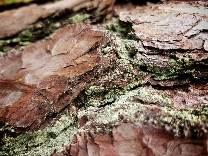 Textured  Day Close-up No People Nature Outdoors Wood - Material Full Frame Tree Stump Tree Trunk Tree Growth Tree Ring Pine Pine Tree Pinus Sylvestris Lichen On A Tree Lichen And Moss Lichen Growth Moss On A Tree