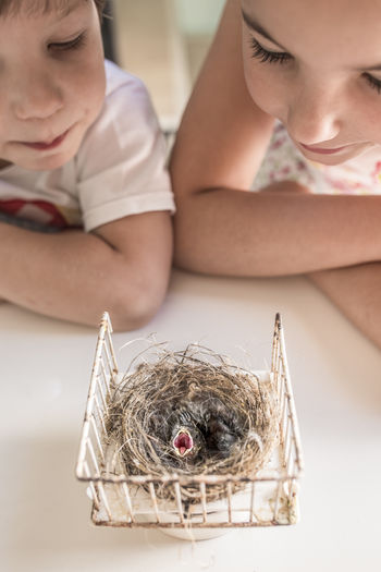 Brother and sister looking at young bird in nest