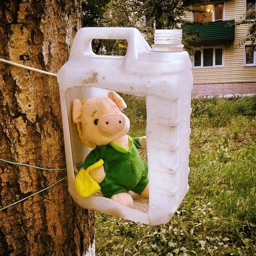 Piglet Omsk Siberia Toystory поросенок омск сибирь