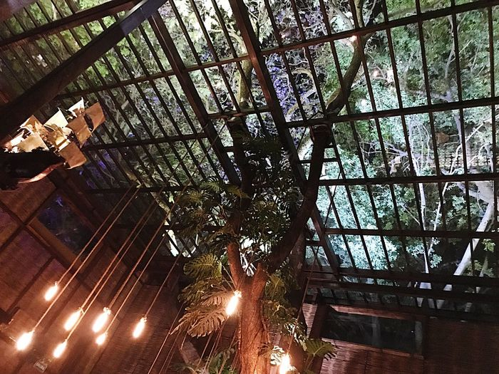 Low Angle View Tree Indoors  Hanging Built Structure Architecture Bar Mexico Guadalajara Boat Detail Lowlight Night Wood Purple Green Travel Rectangle Light Luxury Nice Drinking Art Building