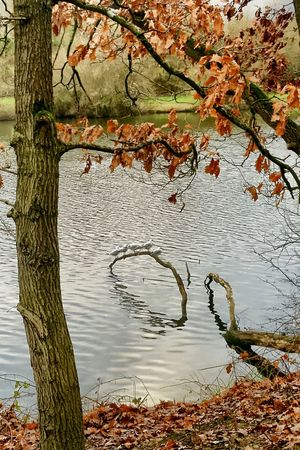 Alignement Birds Water Tree Plant Nature Day No People Lake Tree Trunk Reflection Beauty In Nature Tranquil Scene