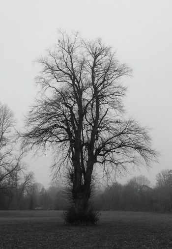 ... a Tree ... Park Newtown Powys Wales Winter Fog Branch Outdoors Single Tree Desaturated Growth Landscape Mono Monochrome Black And White Foggy No People Day Beauty In Nature Nature Grey туман дерево Parque
