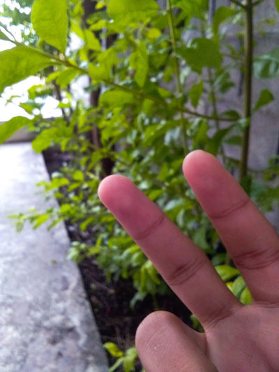 2 inches Backgound Finger Backgound Background Green Green Leaf Leaves Leaves🌿 Wall Wall Blackgound 2 Inches Off!! Inches 2 Fingers Gesturing People Outdoors Close-up first eyeem photo