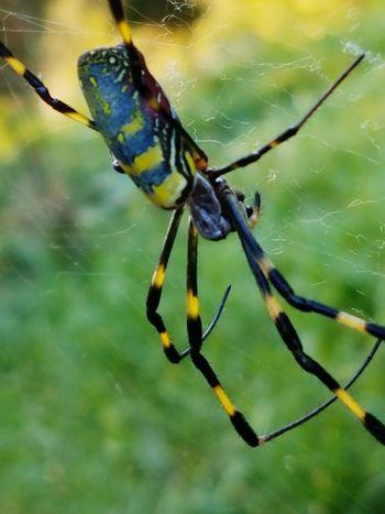 Maximum Closeness Spider Eyes Spiderwolrd Outdoors Nature Beauty Travel Nokogiri-Yama Photo Taking Photos Photography Travel Photography
