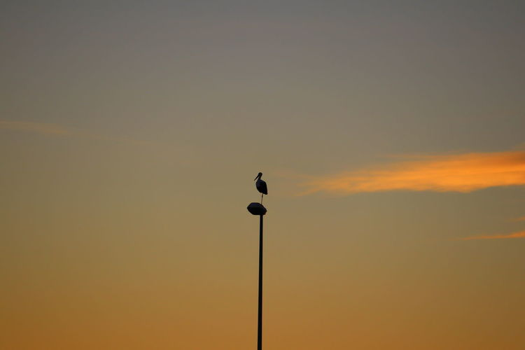 Silhouette bird perching on pole against sky during sunset