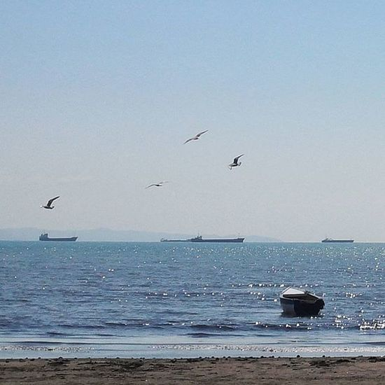 Spring Sea Sunshine Reflection Nature Boat Perspective Water Horizon Seagull Fly Sky Saturday Durres Albania Vegairon Myview Aktualitet