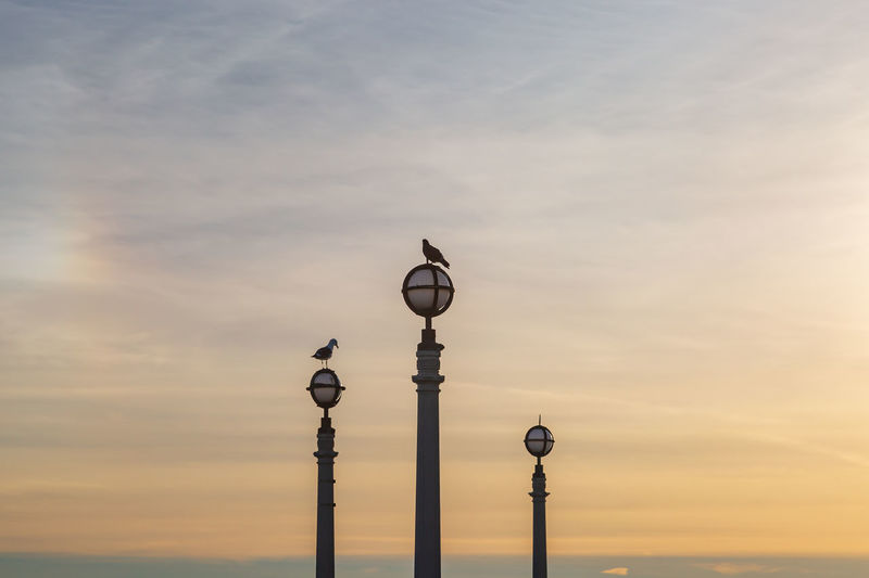 Birds perched on lamp posts against a sunset sky