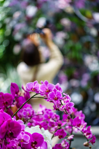 Purple Orchids Orchid Beauty In Nature Blossom Bokeh Botany Close-up Flower Flower Head Flowering Plant Focus On Foreground Nature Petal Pink Color Plant Purple Flower Selective Focus