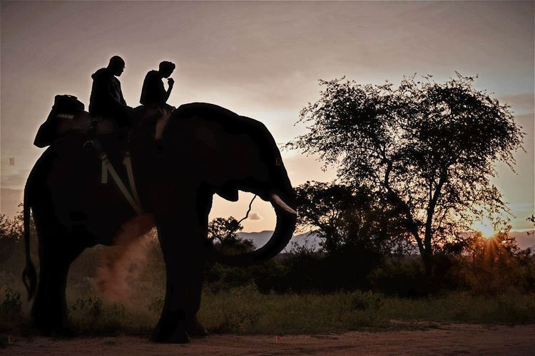 Elephant Silhouette Sunset Mammal One Animal Animal Themes African Elephant Safari Adventure Safari Animals Safari Wildlife Photography Wildlife