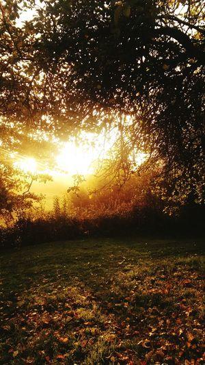 Capture The Moment Sunrise Autumn Colors Secret Garden La France