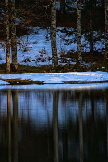 Reflection of trees in lake during winter