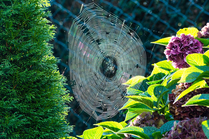 The spider's web or cobweb close up with colorful background. Cobweb Natural Pattern Beauty In Nature Close-up Day Fragility Green Color Growth Leaf Nature No People Outdoors Plant Spider Web, Dew, Morning,