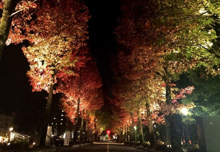 Road along trees at night