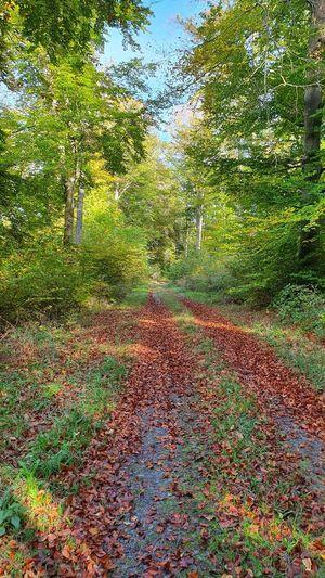 Tree Leaf Road