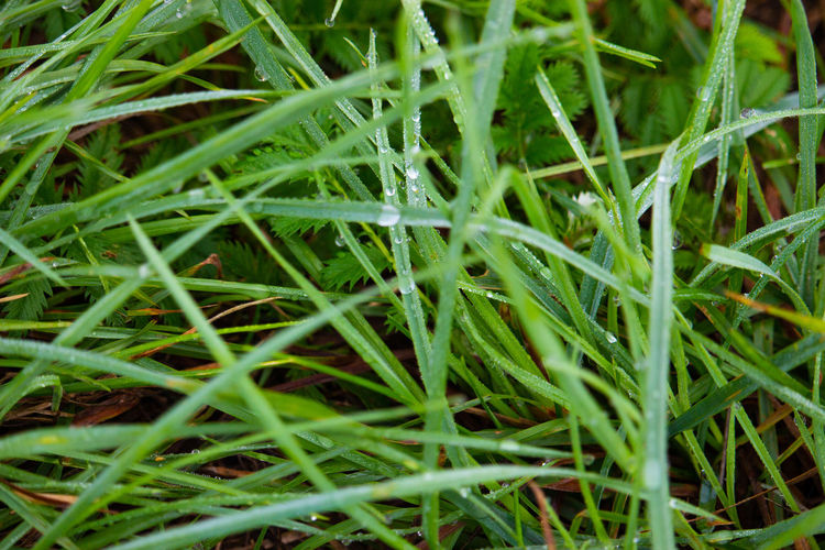 Drops Blade Of Grass Day Freshness Grass Green Color High Angle View Nature Outdoors Plant Wet Plants
