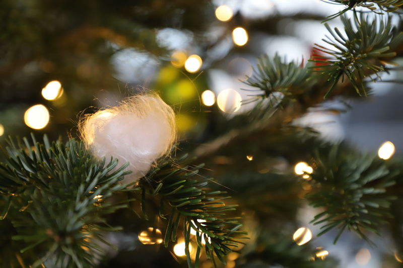 Angels Beautiful Christmas Christmas Lights December Lights Music Pink Tradition Tree Angel Chor Christmas Decoration Christmas Tree Decoration Loop Religion Religious  Selective Focus