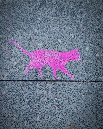 The Mysterious Purple Cat Sidewalk Walking The Line Cats Purple TheMysteriousPurpleCat Purple Cat Sidewalk Art Urban Art Sidewalk Discoveries Sidewalks Tightrope Walking Walking The Lines Pavement Art Pavementporn Pavements Sidewalkart PavementArt Check This Out Pavement Artists Streetart UrbanART Street Art Streetart/graffiti Street Art/Graffiti