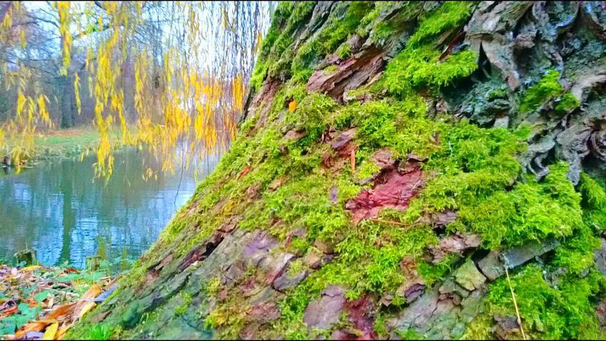 Böhmenteich Nature Photography Herbstfarben Herbstspaziergang Nature Relaxing Time Water Reflections Bad Langensalza