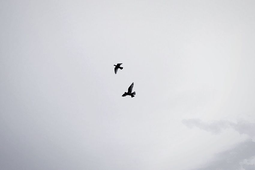 The Great Outdoors - 2018 EyeEm Awards Flying Bird Vertebrate Animal Themes Animals In The Wild Animal Animal Wildlife Low Angle View Sky Mid-air Spread Wings No People Copy Space Nature One Animal Day Outdoors Beauty In Nature Cloud - Sky Eagle Birds Birds_collection Skyscraper The Week on EyeEm