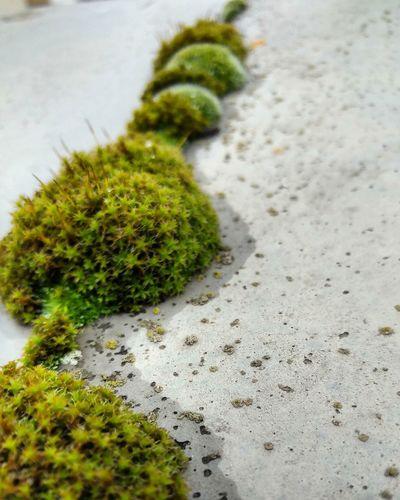 High angle view of moss growing on sand