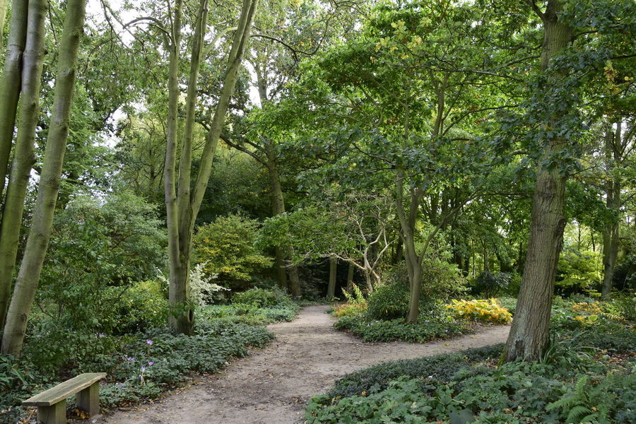 Beauty In Nature Beth Chato Gardens Day Elmstead Market Essex Green Color Growth Horizontal Nature No People Outdoors Path Scenics Tranquil Scene Tranquility Tree WoodLand