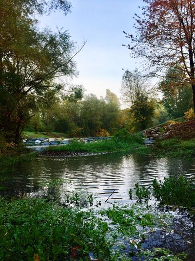 🍃 Der Laabenbach im Herbst 🍂 Wienerwald  Trees Autumn Plants Stones Creek Tree Water Nature Outdoors Growth Day Tranquil Scene Beauty In Nature Tranquility Sky Forest No People Grass Scenics