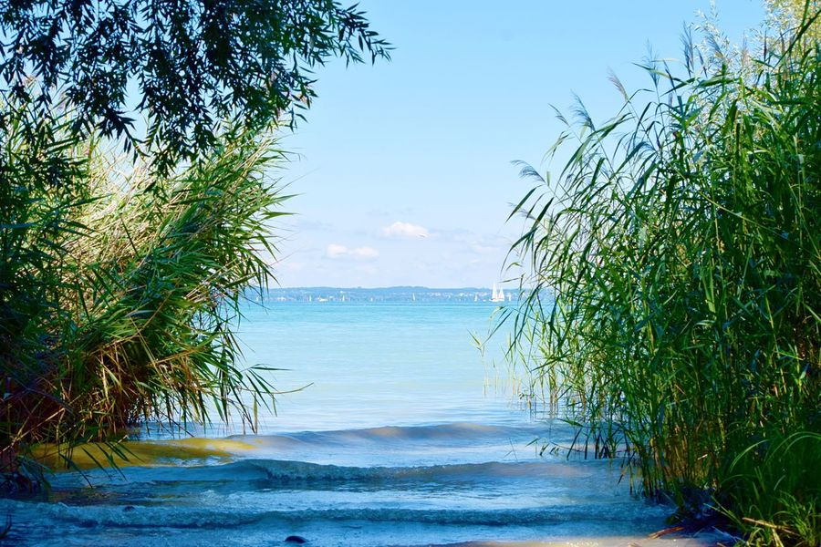Sea Water Nature Sky Growth Scenics Tranquil Scene Beauty In Nature Tranquility Beach Outdoors Day No People Tree Horizon Over Water Clear Sky Bodensee Bodenseebilder Thurgau Switzerland Bodenseeufer Schilfgras Schiffe