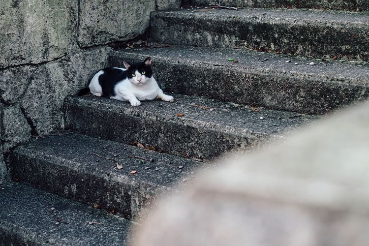 The Cat Watching Me White And Black Cat White And Black Local Town TOWNSCAPE One Animal Domestic Animals Steps Lying Down No People Summer Atomosphere Walking Around Town Alone Time Travel Traveling Kumano Katsuura July July 2017