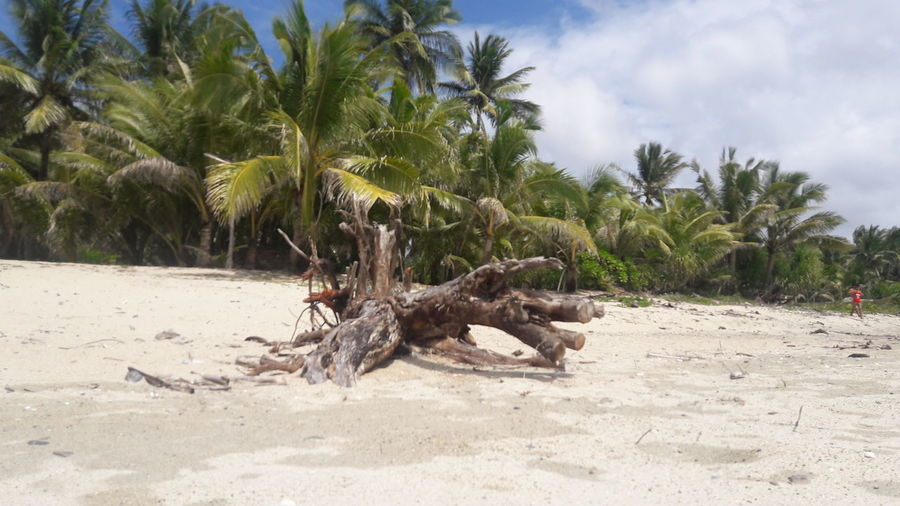 How Do We Build The World? Uprooted Tree Deadtree Traces Of Haiyan Localsunset Pandan Antique
