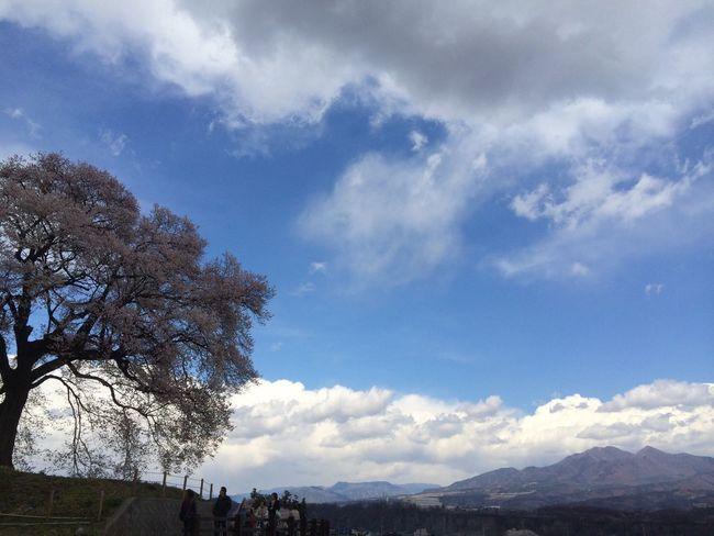 山梨 韮崎 桜 わに塚