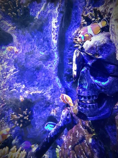 People Sea Life Animal Themes Indoors  Adults Only Adult Day Skeleton Underwater Nemo Dorry Dorryfish Fish