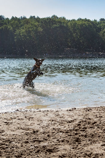 Animal Beach Beach For Dogs Beauty In Nature Canine Day Dog Domestic Domestic Animals Jumping Dog Land Mammal Motion Nature One Animal Outdoors Pets Plant Splashing Tree Vertebrate Water