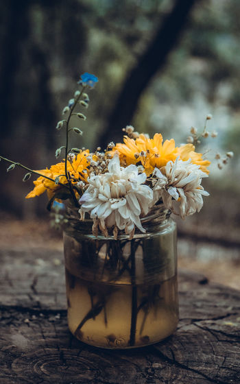 Close-up of yellow flowering plant in jar on table