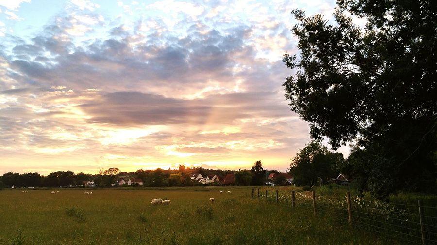 Nayland sunset 🌇