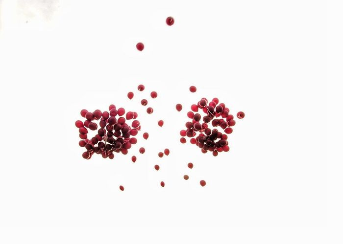 Fruit Red Seed Pomegranate Pomegranate Seed No People Studio Shot Healthy Eating Food Freshness Day