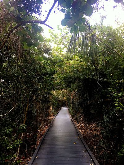 Plant Tree Direction The Way Forward Growth Green Color Nature Footpath Sunlight Beauty In Nature Tranquility Park - Man Made Space Scenics - Nature Outdoors