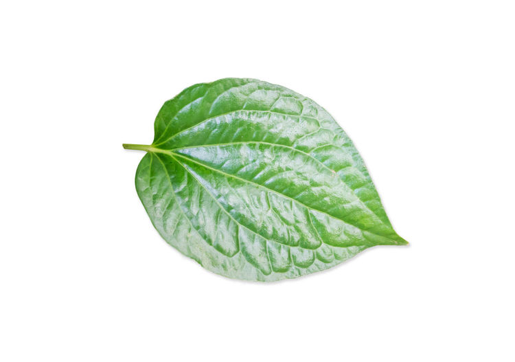 Close-up of green leaf on white background