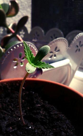day 3 Grow Slow Watching Plants Grow
