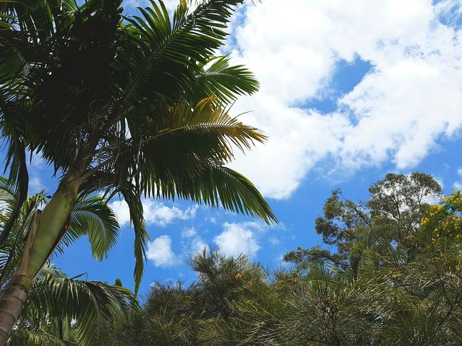 Tree Sky Low Angle View Nature No People Outdoors Cloud - Sky Palm Tree Beauty In Nature Day
