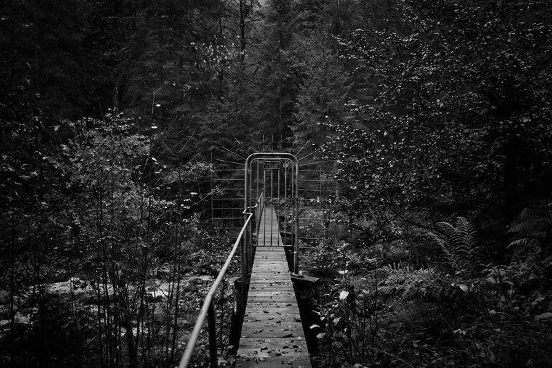 Footbridge in forest