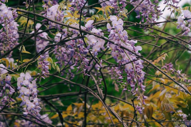 Flowering Plant Plant Flower Fragility Freshness Beauty In Nature Growth Vulnerability  Nature Botany Focus On Foreground Low Angle View Close-up Springtime Blossom Day Branch No People Twig Tree