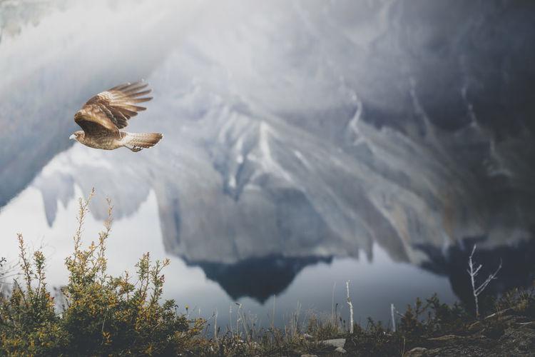 View of bird flying over lake against mountains