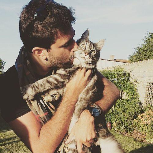 Cat Maincoon Sun Jupiterdeslynxcouronnes Maincoon Instagram Insta Instagood Chat Animals