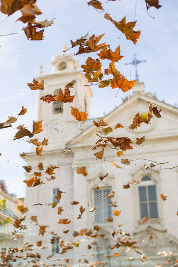 Praça de São Paulo Church Lisbonlovers Portugal Architecture Autumn Day Leaf Lisbon Nature No People Outdoors