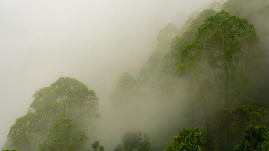the misty forest Jungle Outdoors Rainforest Bali Kintamani Tree Mountain Fog Water Torrential Rain Smog Condensation Weather Monsoon Rain Rainfall Rainy Season Extreme Weather Puddle Wet Tropical Tree Dew Foggy Shore Snowcapped Mountain Mountain Range Hazy  Season  Calm Tropical Rainforest