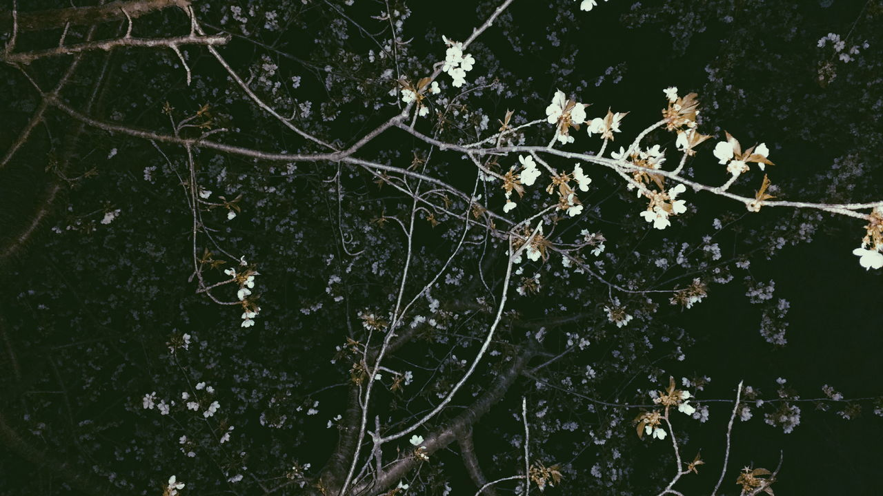 nature, growth, plant, branch, no people, flower, outdoors, leaf, beauty in nature, tree, fragility, close-up, day, freshness